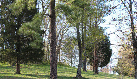 Elctrees